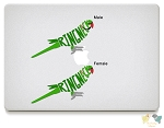 Indian Ringneck Vinyl Decals